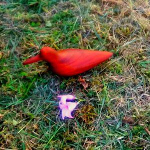 mahogany bird 1