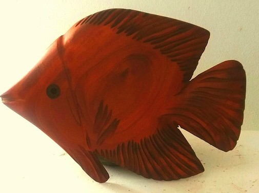 mahogany angel fish